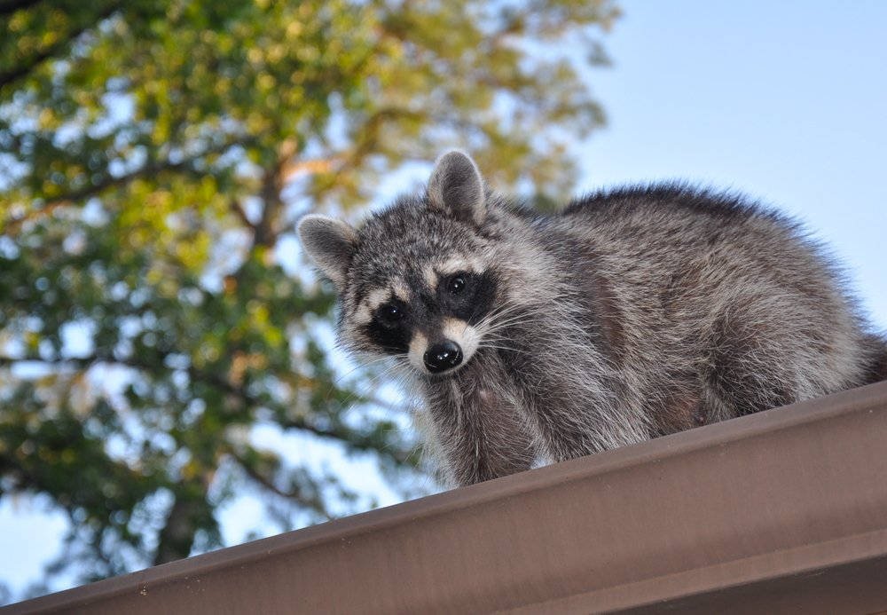 5 Pests that can be living in your gutters