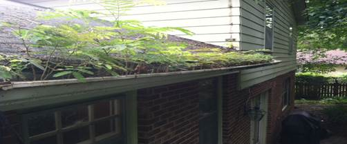 The gutter of a Toronto home, plants are visible growing out of it