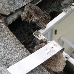 honey comb in an eavestrough